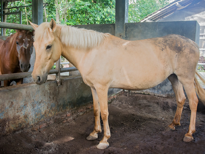kuda-lagi